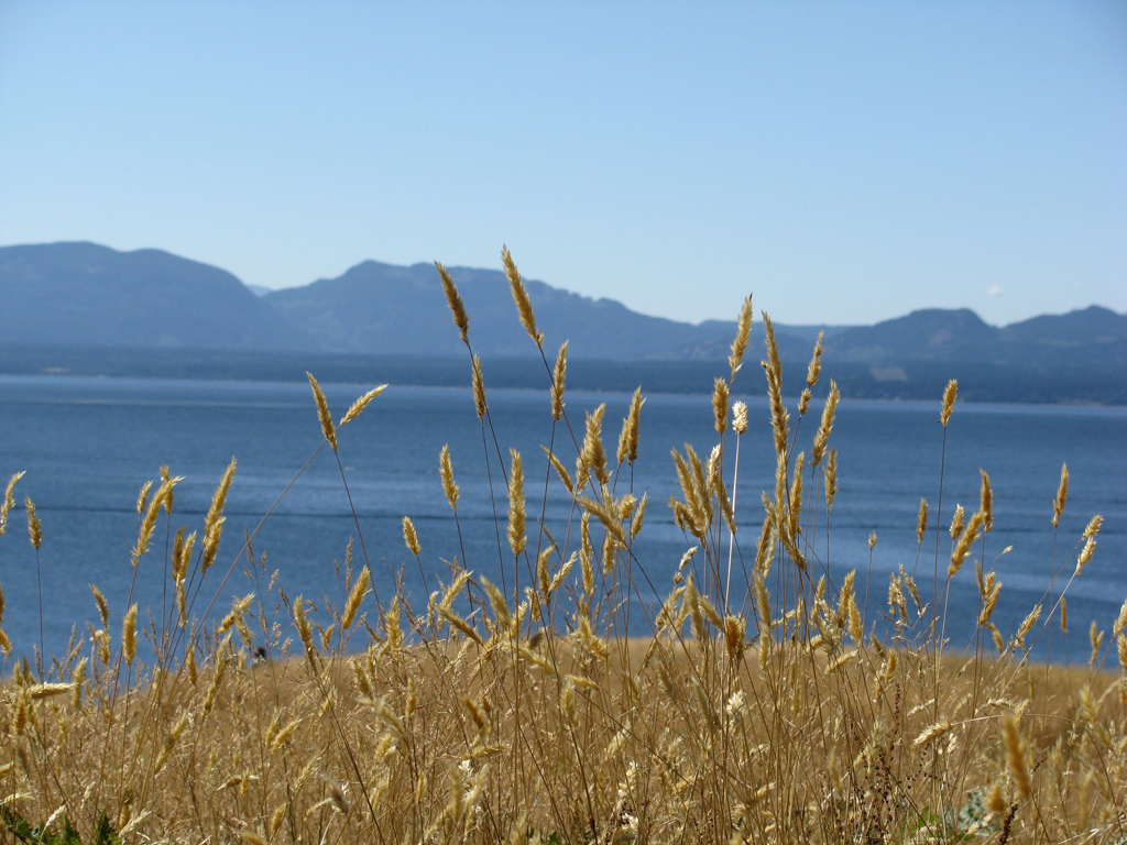 grasses-and-mts